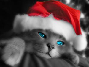 CyBerNe7 Cristmas Cat